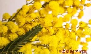 桂花树风水