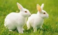 2023兔宝宝取名字大全