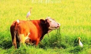 周易取名字免费名字如何取2021年属牛的