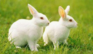 兔宝宝起名