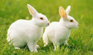 天干地支卯兔